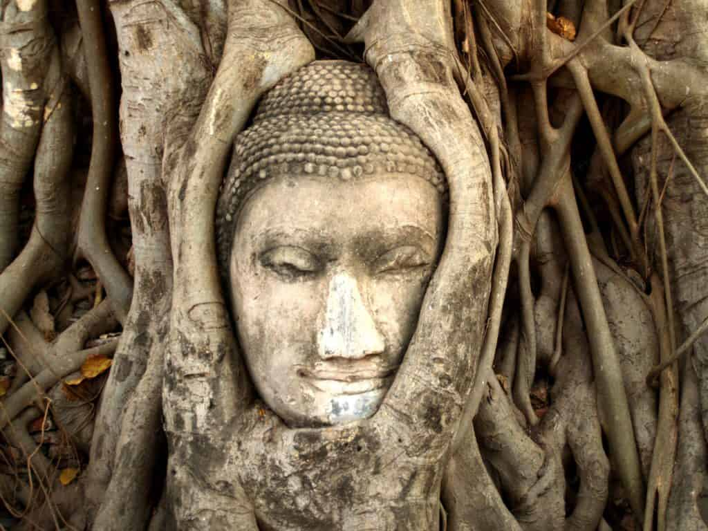 Statue head surrounded by tree roots at Ayutthaya. Visit on a Bangkok 4 day itinerary