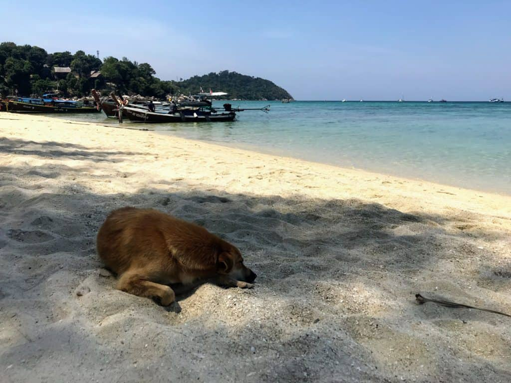 dog on the beach in koh lipe
