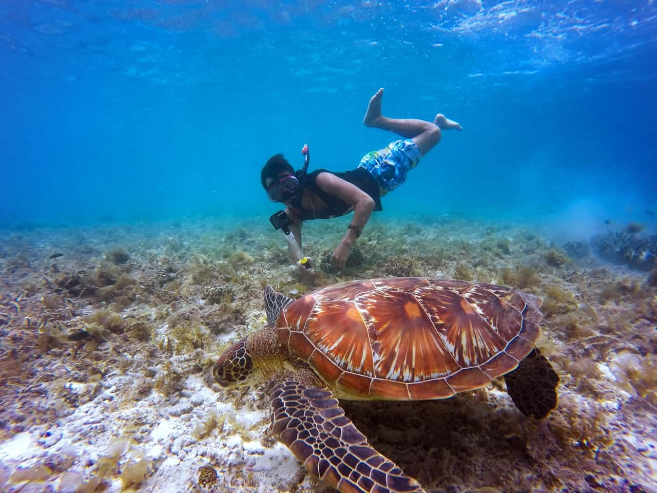 Man snorkelling in Koh Lanta with a turtle